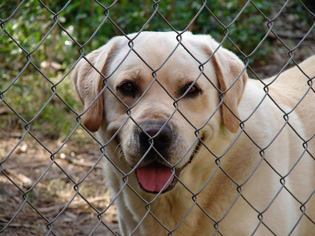 I cani al canile si pagano? Consigli utili prima di adottarli